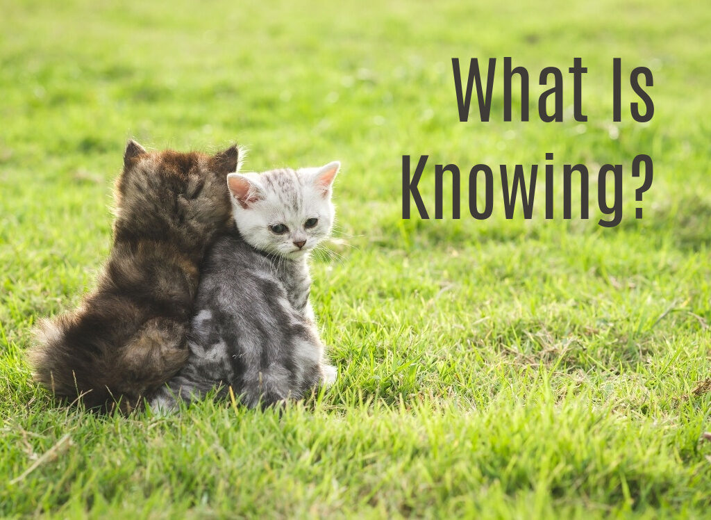 What is Knowing?