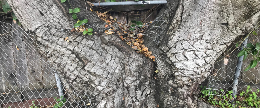 the resilience of nature